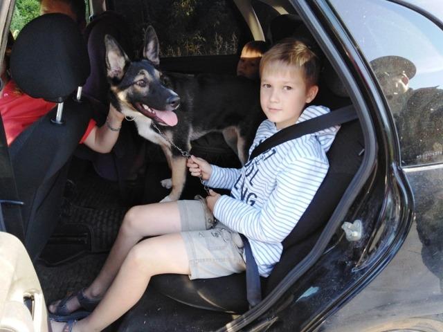 Правила перевозки детей в автомобиле 2019: изменения, требования и штрафы